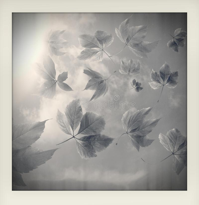 Black and white impression of autumn fall background. Many autumn leaves with sun rays made like an instant amateur vintage photog royalty free illustration