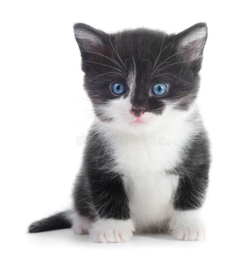 Black white kitten. Black and white kitten on white background royalty free stock images