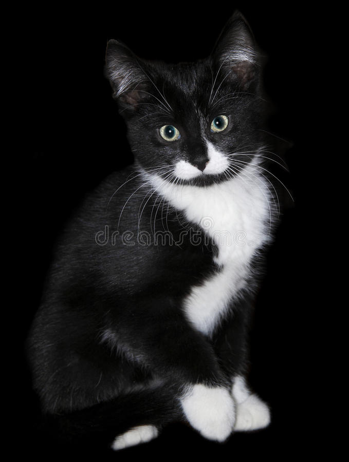 Black and white kitten cat royalty free stock photography