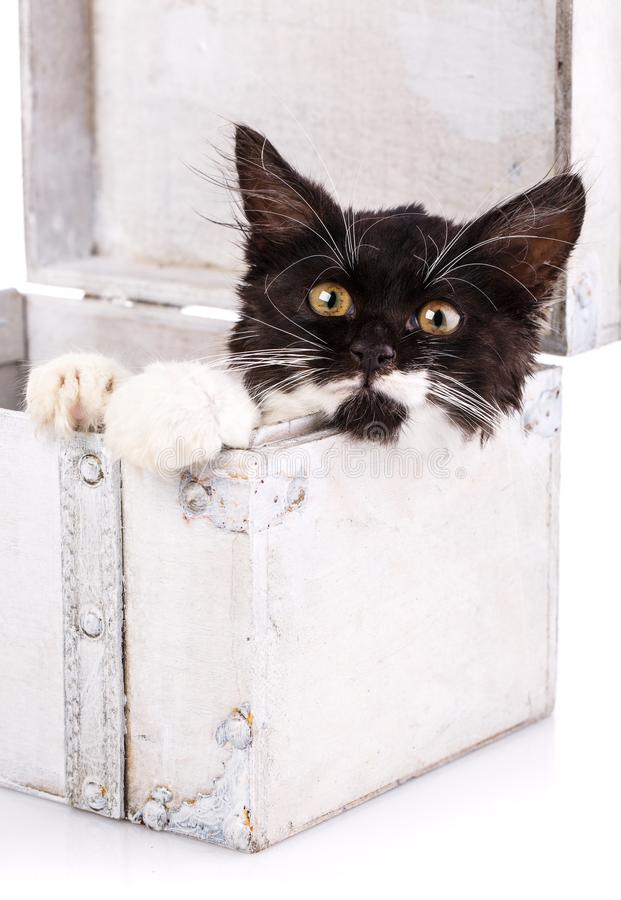 Black and white kitten lies in a white suitcase. Isolated on a white background stock photography