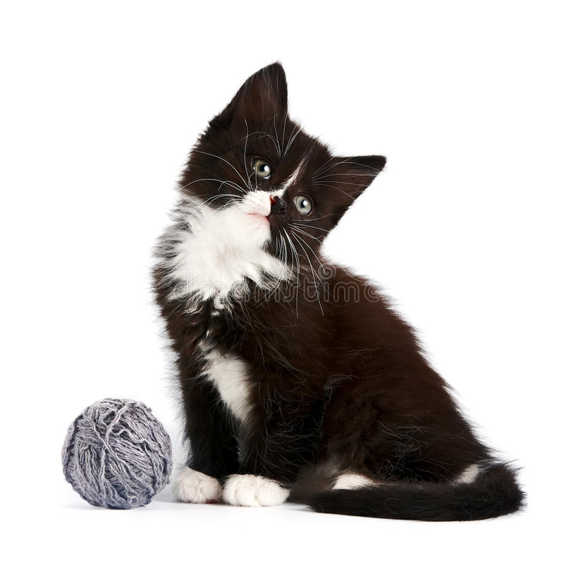 Download Black-and-white Kitten With A Woolen Ball Stock Photo - Image: 26261864