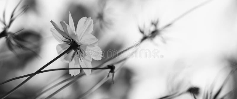 Black&white kwiat fotografia royalty free