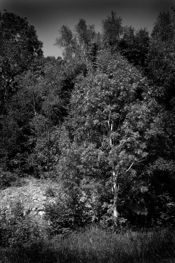 Download Black and white landscape stock image. Image of dramatic - 7012407