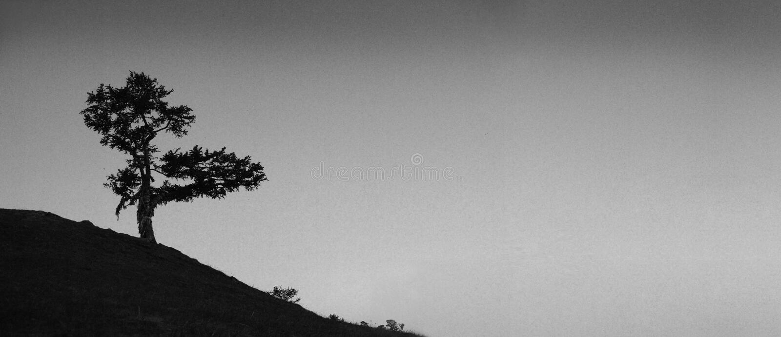 Black and white landscape. Lonely tree on the slope against the sky. stock images