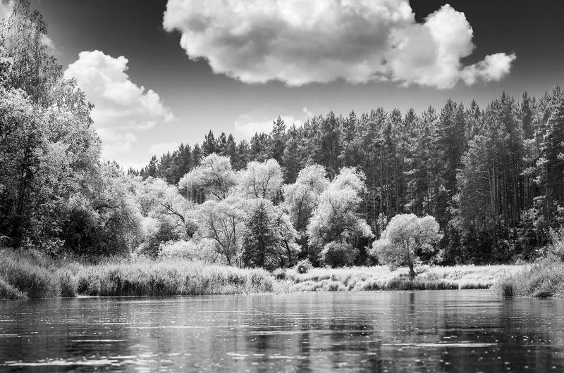 Black and white landscape stock photo. Image of forest ...