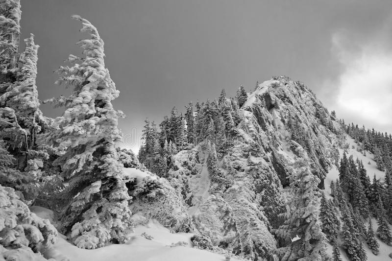 Black and white landscape of snow covered pine trees and mountain peaks on a cloudy winter day. royalty free stock photo