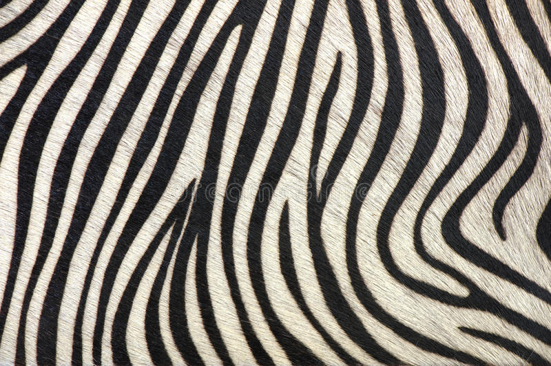 Download Black and white lines stock image. Image of hide, material - 12586111