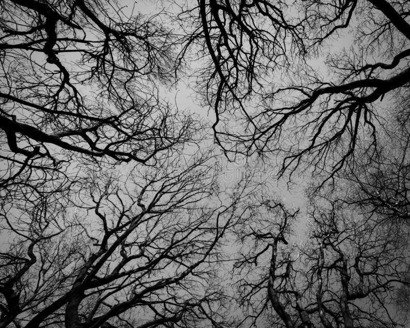 The Nerves. A black and white look up shot of trees that form an abstract scene that resemble nerves or vessels of some kind. Eerie and different stock photos