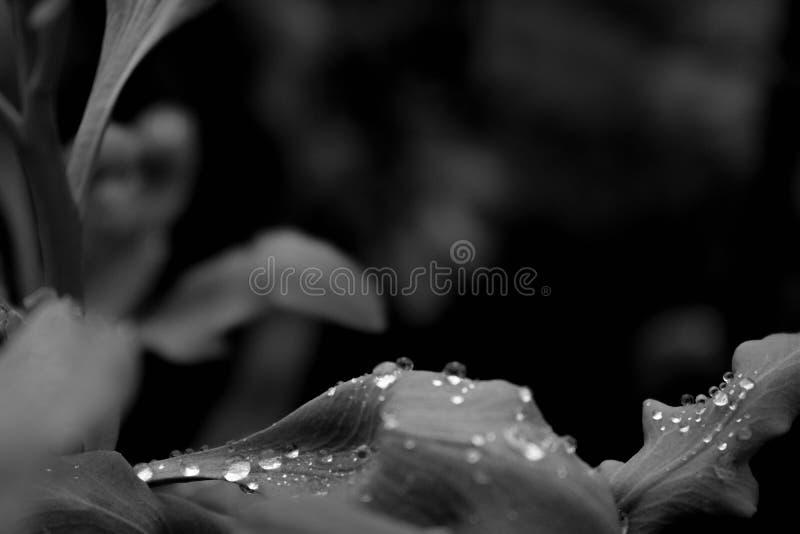 Teardrops in my garden royalty free stock image