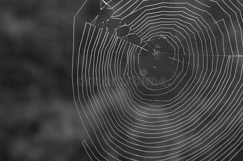 Black and White Macro Photography of a Natural Spiderweb in the Great Smoky Mountains. royalty free stock images