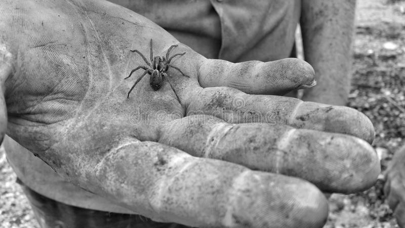 Black And White, Monochrome Photography, Hand, Monochrome royalty free stock images