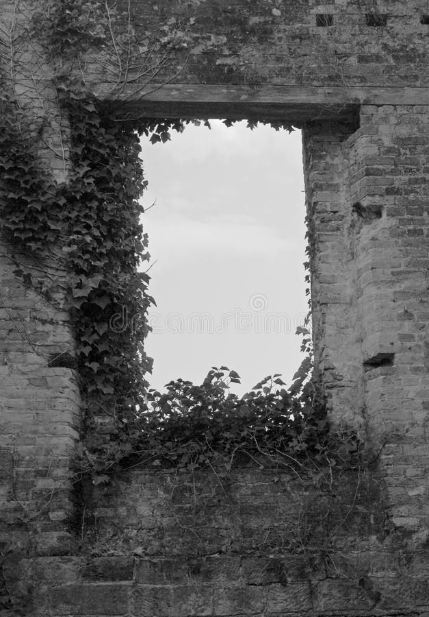 Black and White of an Old Empty Brick Window with Ivy stock photography
