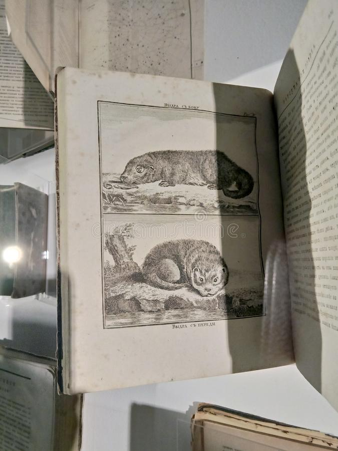 Black and white, old textbooks with lithographs, telling about ancient animals, mammals, their description and the table of crossi. Ng of individuals. the stock images