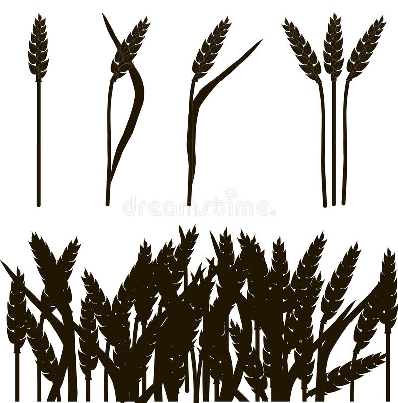 Black and white outline of wheat ears and wheat field, painting, vector vector illustration