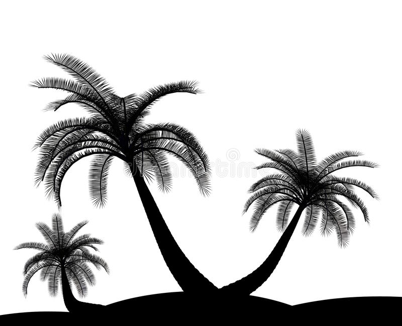 Black On White Palm Tree Environment Royalty Free Stock Images