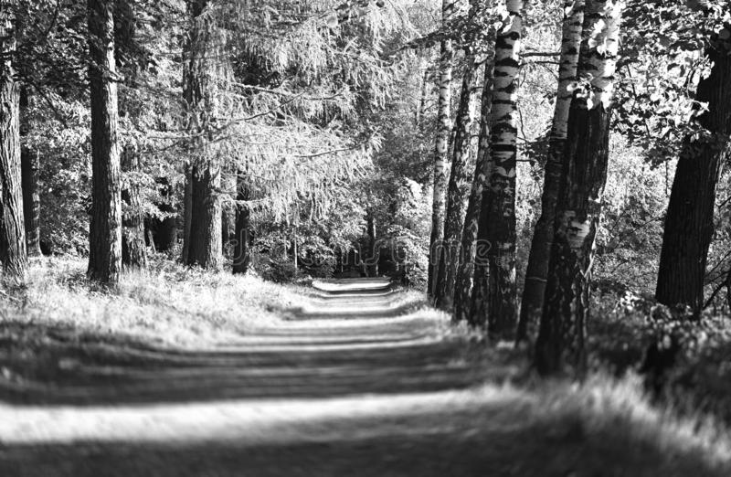 Black and white park alley landscape background royalty free stock image