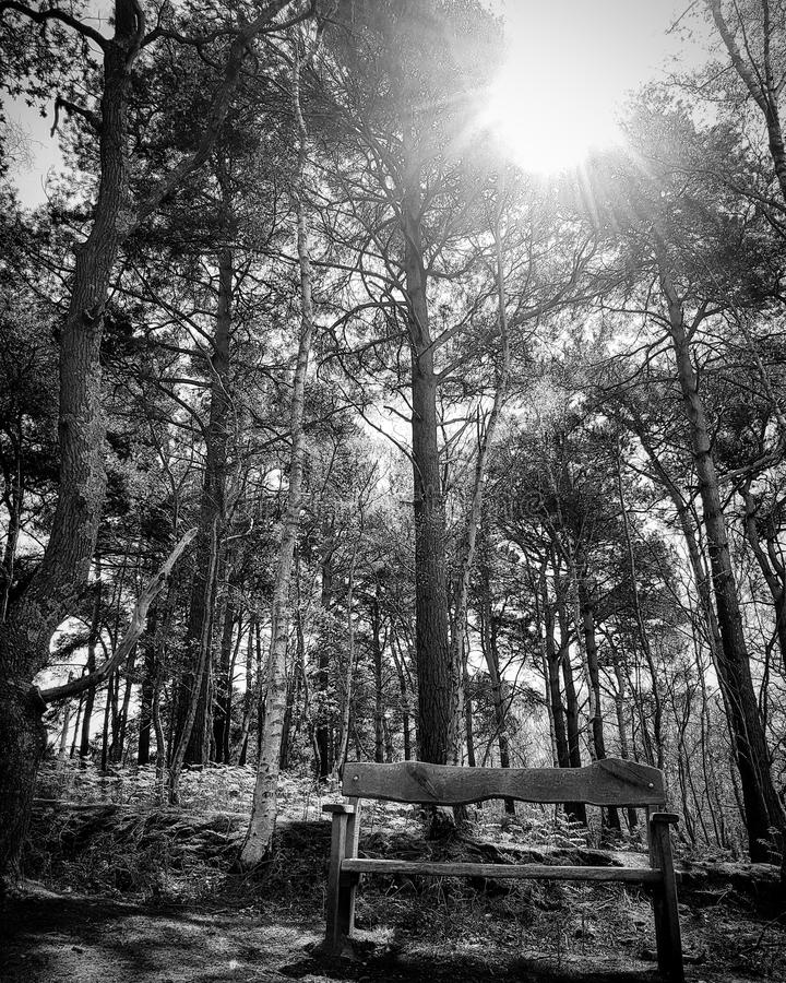 Black and white photo of bench stock photography