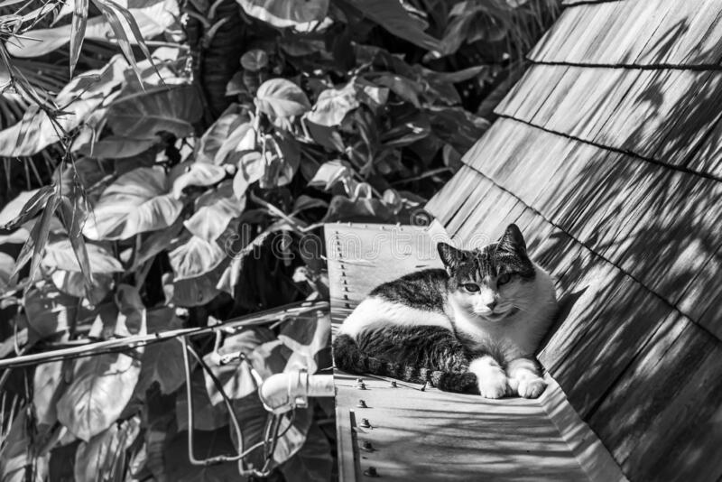 Black and white photo of cat resting on roof. Under the shadow stock photos