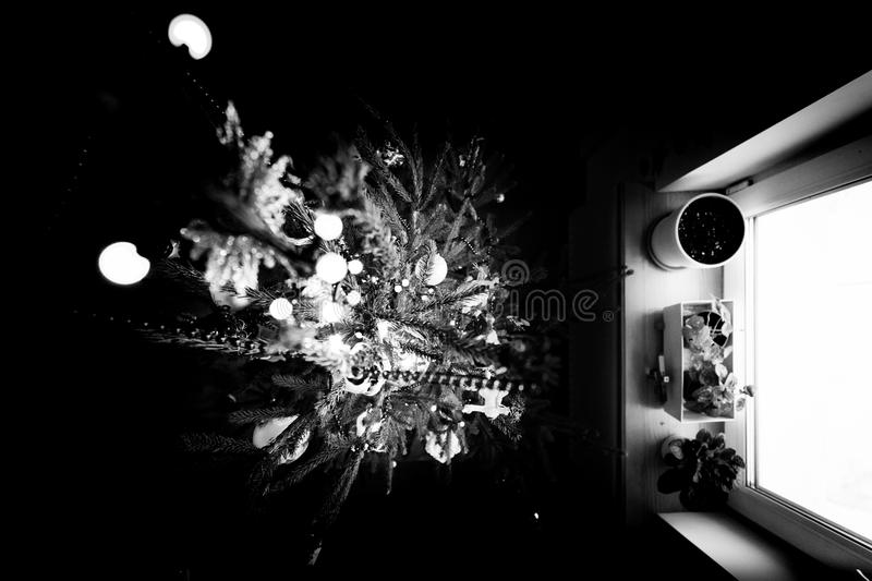 Black and white photo of a Christmas tree with light from a window. View of the New Year tree from the top. Festive Christmas tree in front of a window stock photo