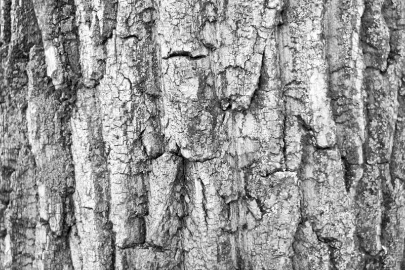 The black and white photo of close-up wood bark. Background for timber industry. Pine bark stock images