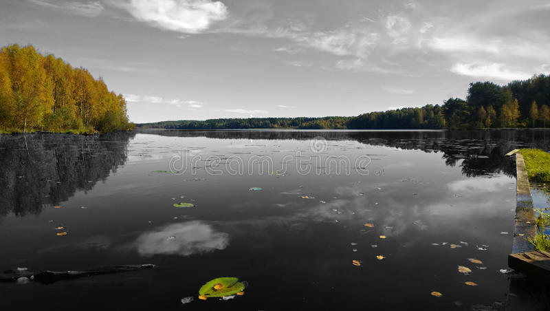 Black and white photo with the colored forest, a pier and water lilies. Big beautiful calm lake in the fall. It reflects the forest and clouds royalty free stock image