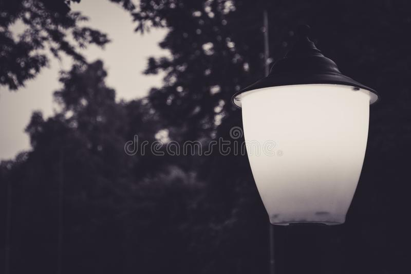 Black and white photo of foliage and a lantern. Black and white photo of silhouettes of foliage and a burning small lantern stock photography
