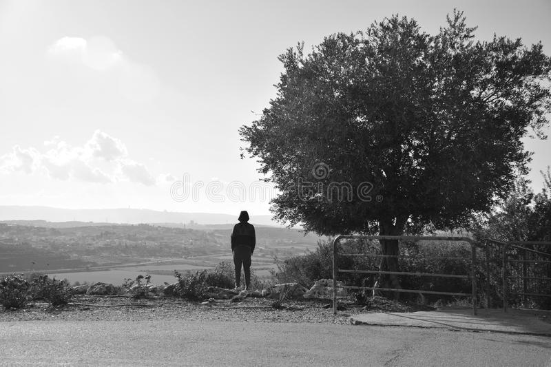 A man stands next to an olive tree royalty free stock image