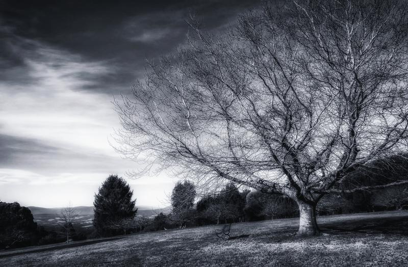 Bare tree and a bench stock images