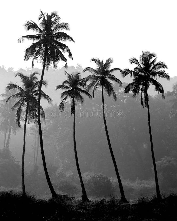 Black and white photo of palm trees silhouette royalty free stock photo