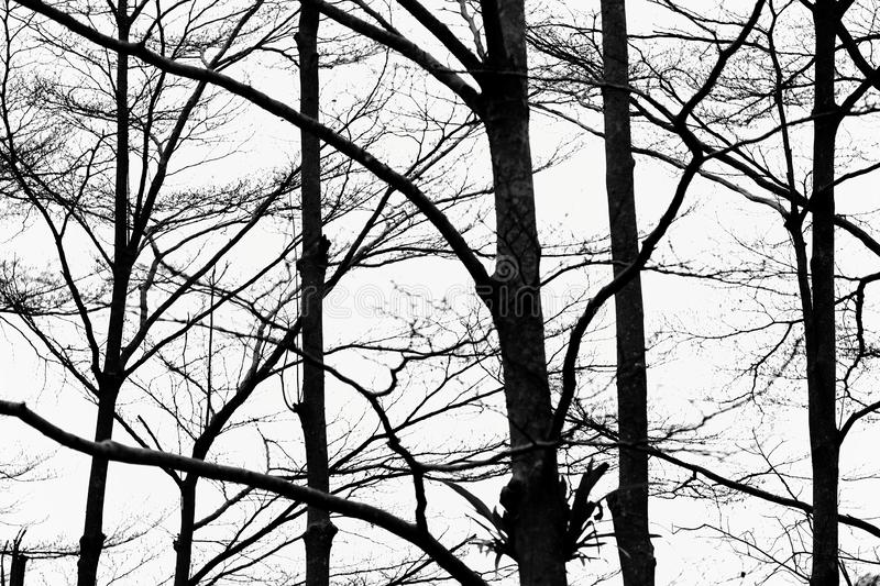 A black and white photo of sad intertwined bare branches. Photo about A black and white photo of sad intertwined bare branches. Image of photo, twigs, pattern stock image