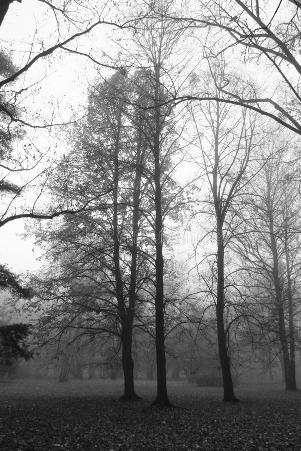 Bare trees in the fog stock photography