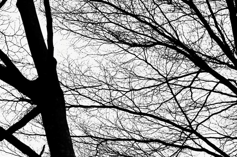 Black and white Branches and trunks under the sky royalty free stock photography