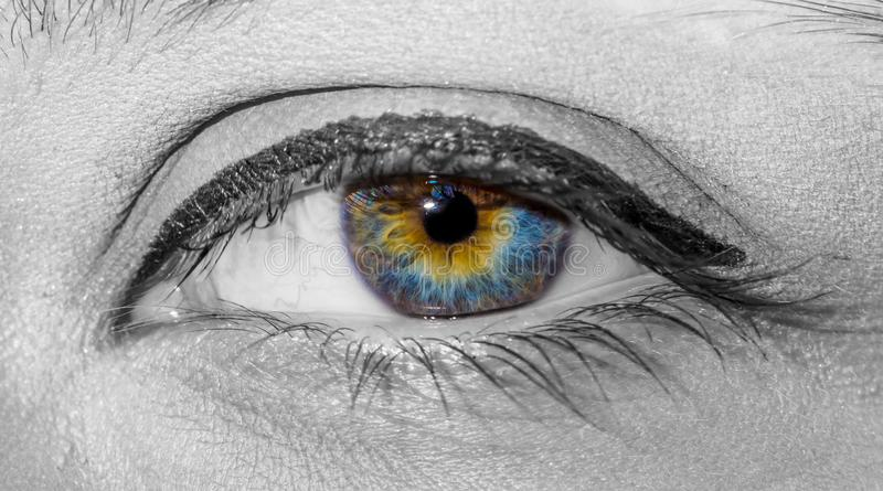 Black and white photo of woman beautiful colorful multicolor eye with painted eyelashes close-up stock photography