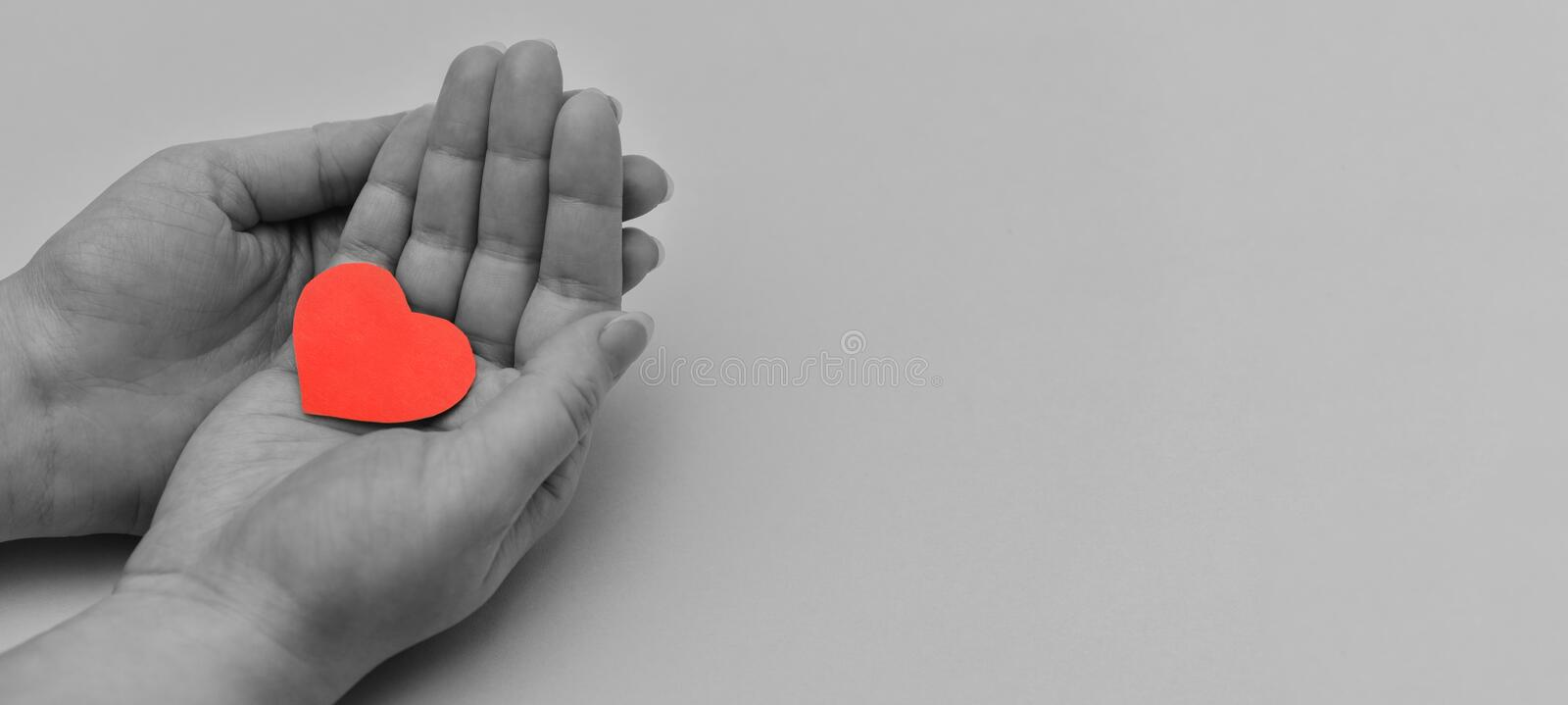 Black and white photo with women`s hands holding a colored red heart. Banner. Fragment of a women`s hands. Gorizontal photo royalty free stock photography