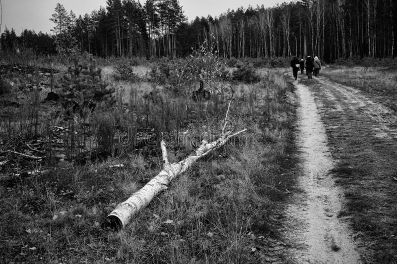 Road to the forest with people. Black and white picture of the forest. Lonely way to the forest with people and old tree royalty free stock image