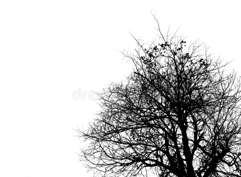 Black and white picture of trees on clear sky. Use for death, mourning and sadness concept stock photos