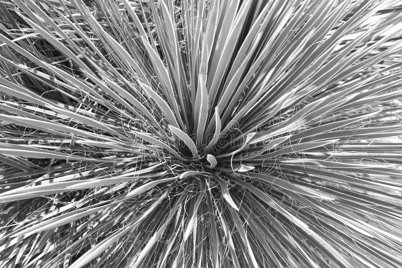 Black and white plant. An abstracted organic image in black and white stock photos