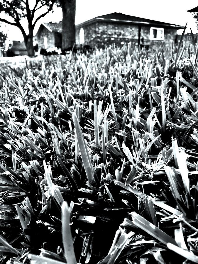 Black And White, Plant, Monochrome Photography, Tree Free Public Domain Cc0 Image
