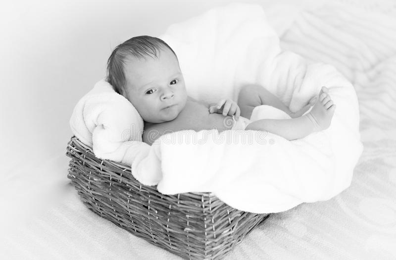 Black and white portrait of cute newborn baby lying in big wicker basket royalty free stock images