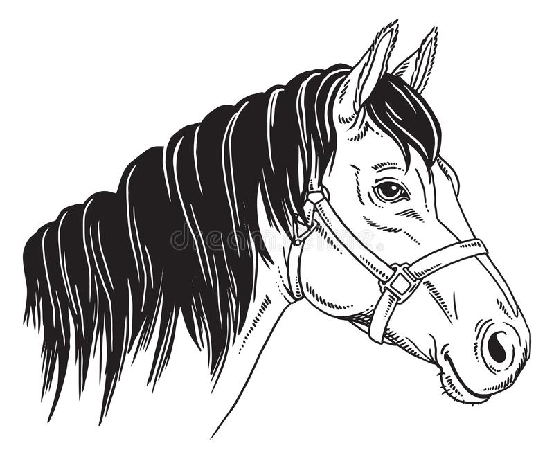 Black and white portrait of a horse. stock illustration