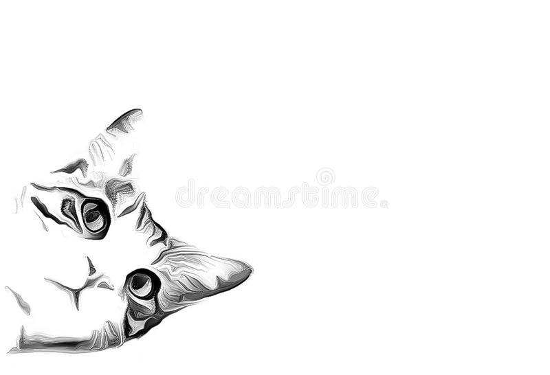 Black and white portrait of a peeking tabby tuxedo cat isolated on white background. Black and white portrait of a tabby tuxedo cat isolated on white background stock images