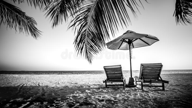 Dream scene. Beautiful palm tree over white sand beach. Summer nature view. Dramatic process, black and white royalty free stock photography