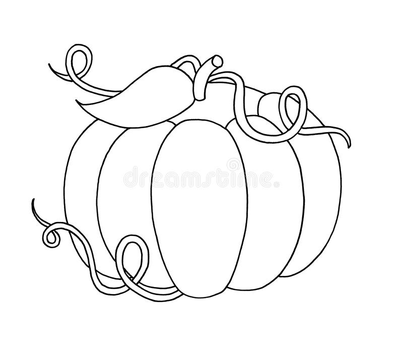 Black And White - Pumpkin Stock Image
