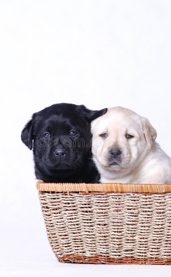 Black & White Puppies stock images