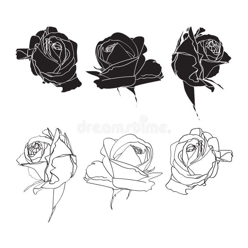 Black and white roses line set isolated on white background. Spring summer flowers vector illustration royalty free illustration