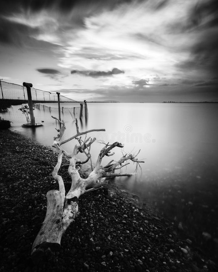 Black and White Seascape of a piece of Driftwood washed up along the coastline at sunset taken with a long exposure royalty free stock images