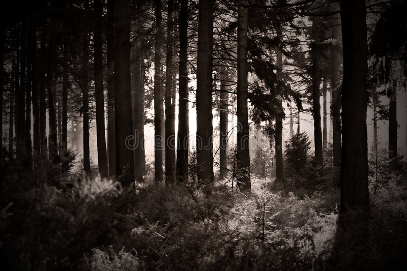 Black and White Shot of Forest stock photo