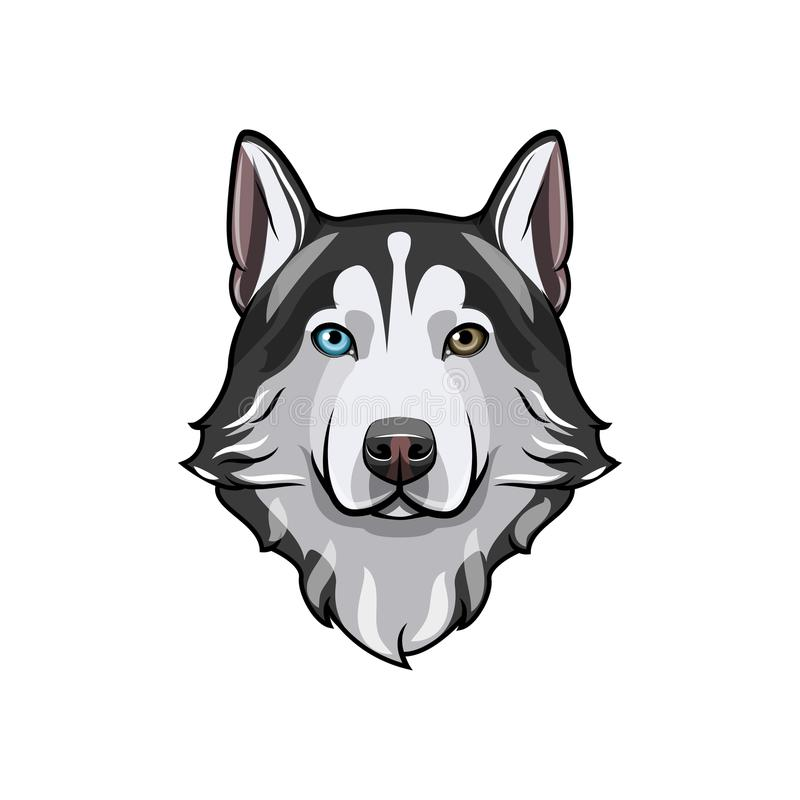 Black and white Siberian husky with multi-colored eyes. Hand drawn portrait of dog. Vector illustration stock illustration