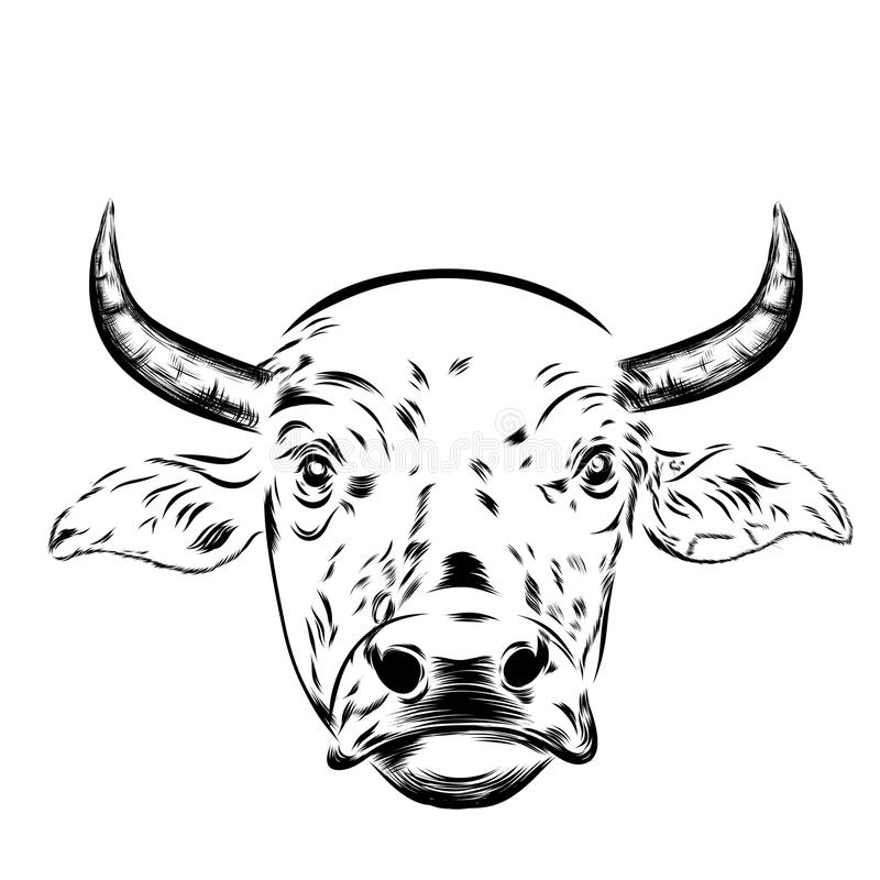Black And White Sketch Of A Cow`s Face  Stock Illustration
