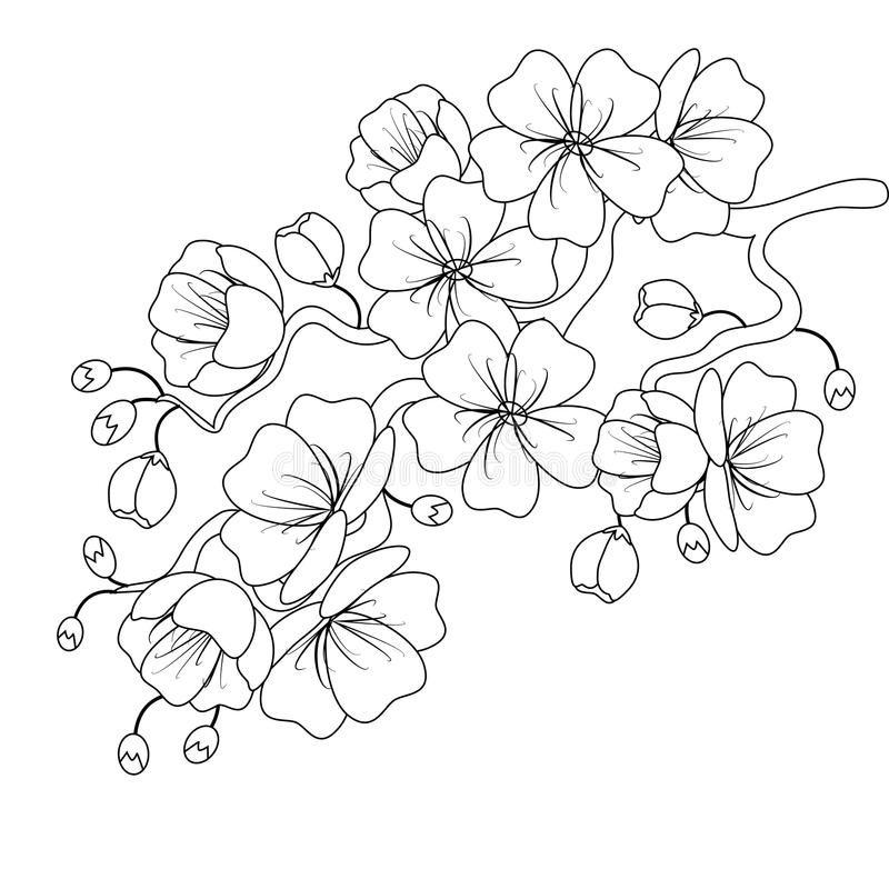 Black-and-white sketch of a cherry blossom branch. Vector illustration. royalty free stock images